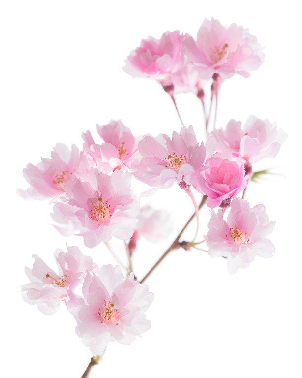 2013-03-C-3-Maxine-Higgins-Cherry-Blossom-614x768.jpg