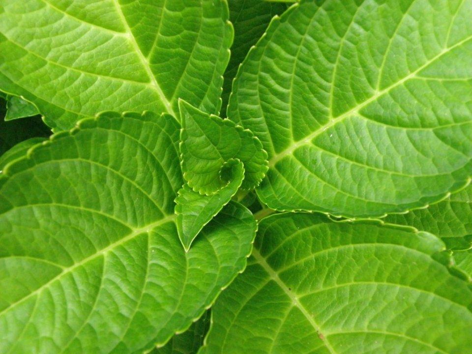 Jordan-Utter-+-Leaves-+-P9130070-1024x768