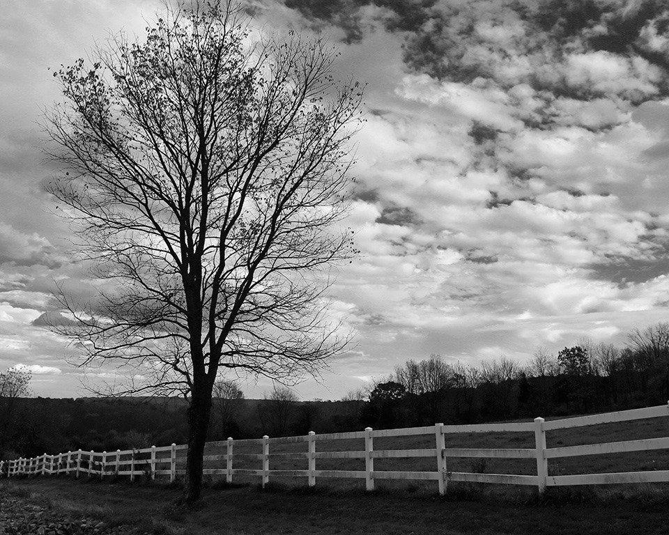 2014-10_PRINT_Info-_Rhonda-Cullens-Horse-Guard-Property-960x768