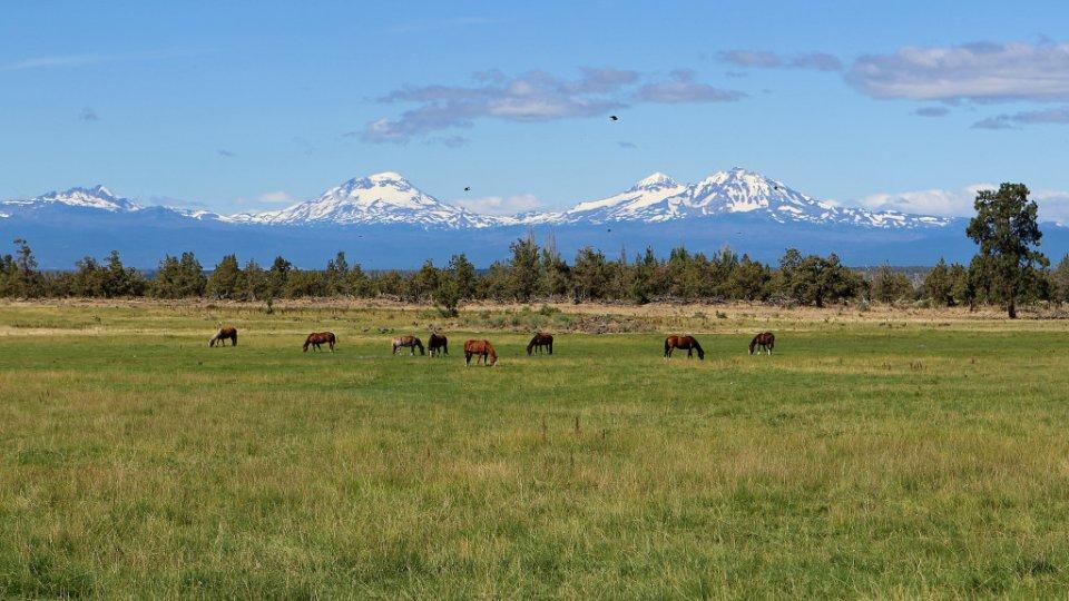 Rhonda-Cullens-Grazing-Horses-in-Central-Oregon-20140724-102020-5D-adj-2-1024x576