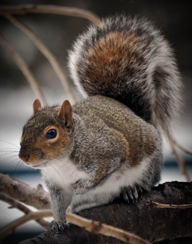 squirel-on-tree-framed-2-fc0c11ba37bdcffd005a56f6c75326129e0ebf70