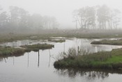 Dreaming of Freedom in the Mists of Chincoteague