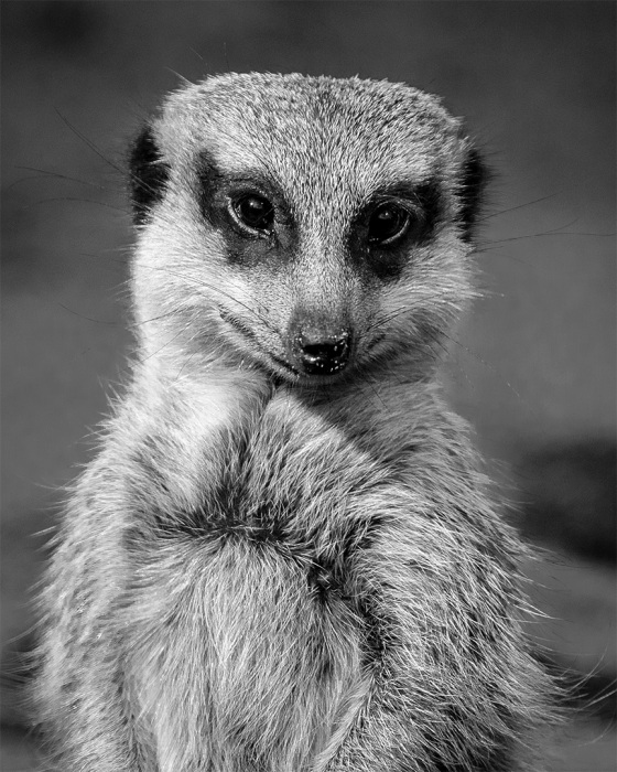 Hi, I'm Meerkat. What's Your Name?