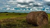 Kansas Pasture