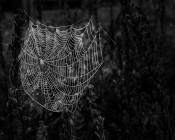Dew Drops On A Web