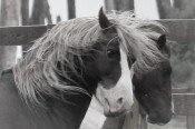 Wild Eyed Stallion
