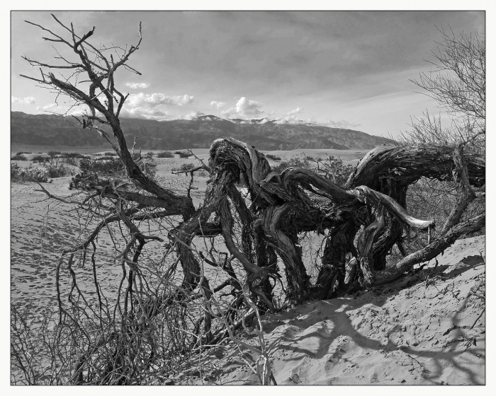 Death Valley Sentinel