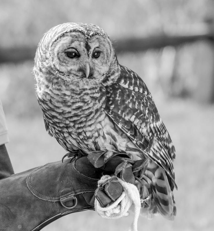 Audubon Society in Sharon