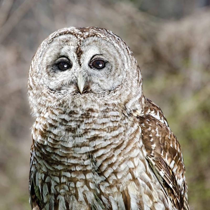 owl1-ec733e7bf210bf5a1e4d21ea1e1637c6f5fa5e14