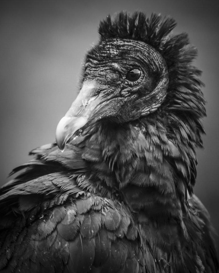 2016-04_PRINT_Luise-Gleason_Rock-n-Roll-Vulture-768x960