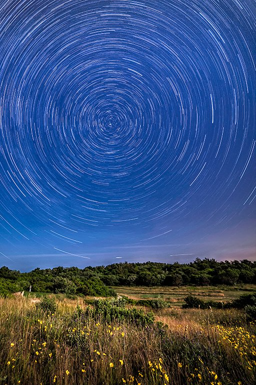 2016-04_PRINT_Rick-Tyrseck_Star-Trails-over-Wildflowers