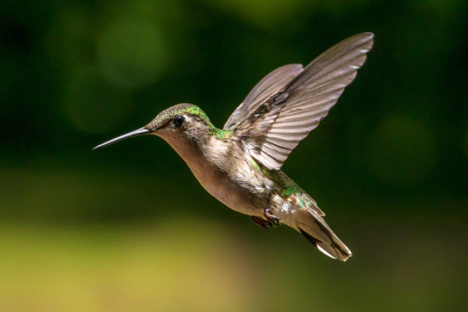 2017-02_assigned3_michelle-babyak_hummingbird-1024x683