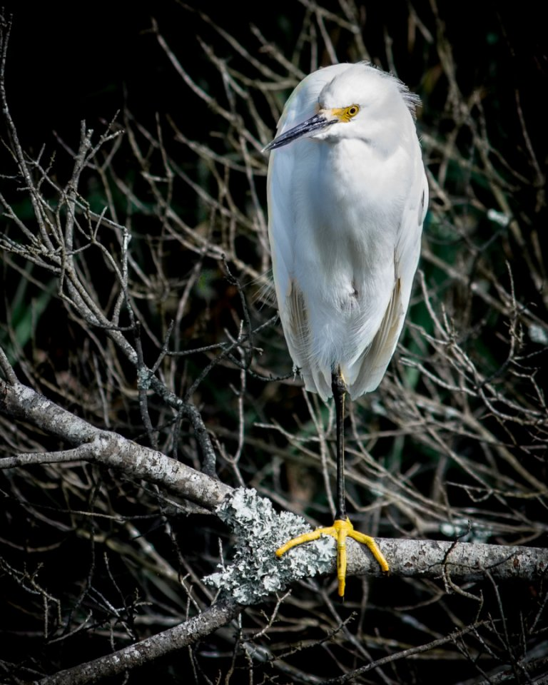 2017-03_Print_Mark-Ashbolt_White-Bird-864x1080