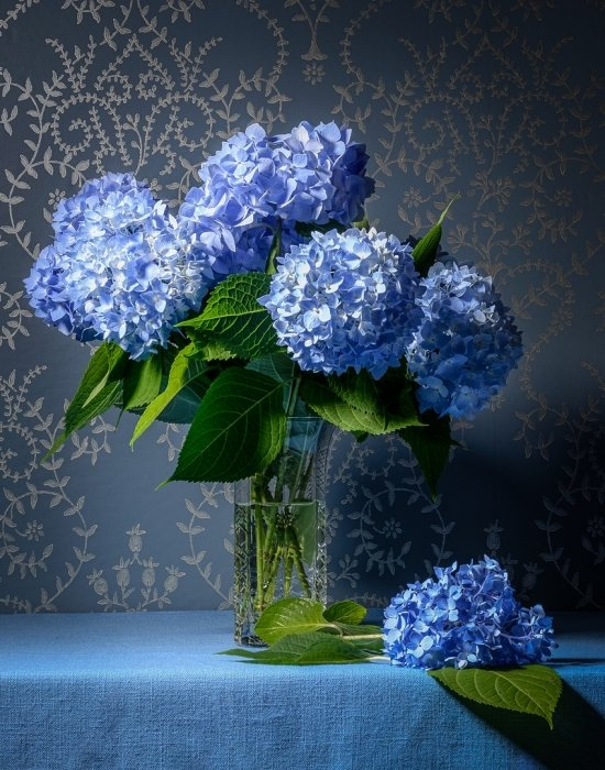 2017-09-28_digital-open-classa_2450_charlie-batchelder_bluehydrangeas_thumb