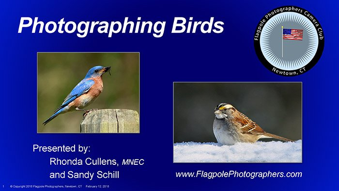 Flagpole Photographers Bird Photography For New Haven Rhonda and Sandy Final_Page_01
