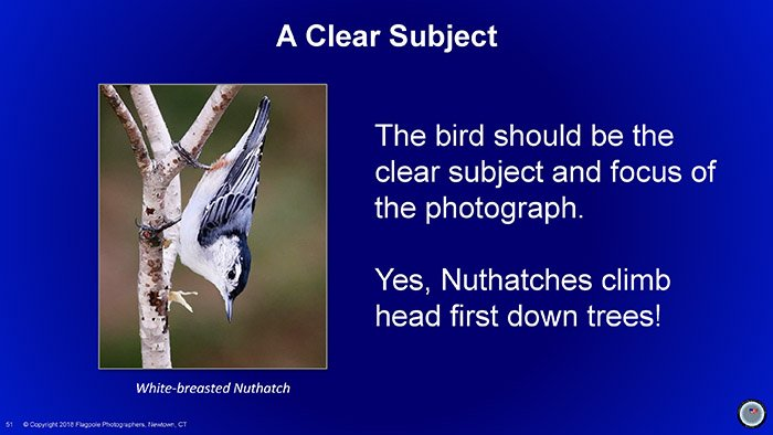 Flagpole Photographers Bird Photography For New Haven Rhonda and Sandy Final_Page_51