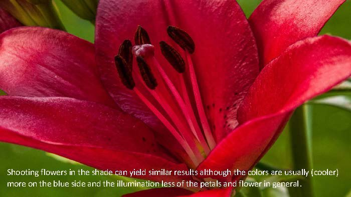 Photographing Flowers - John Munno_Page_04