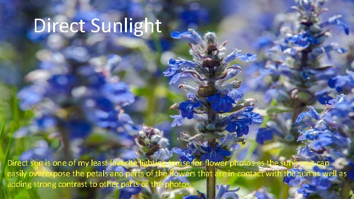 Photographing Flowers - John Munno_Page_06