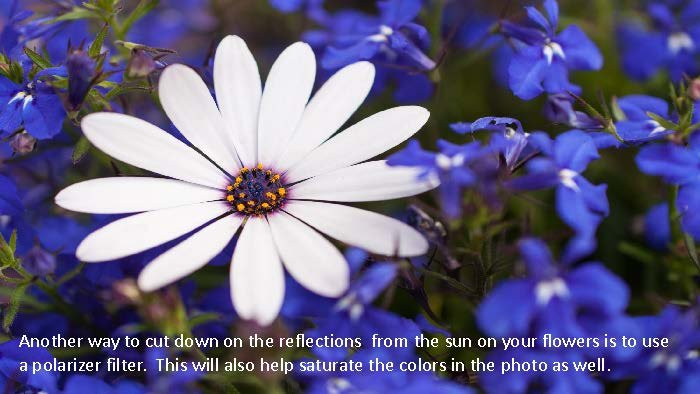 Photographing Flowers - John Munno_Page_08