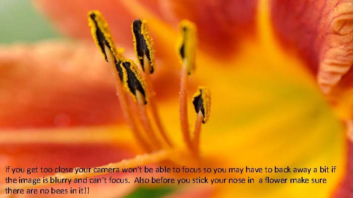 Photographing Flowers - John Munno_Page_10