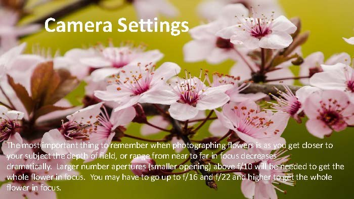 Photographing Flowers - John Munno_Page_17