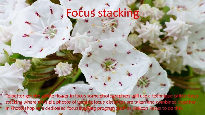 Photographing Flowers - John Munno_Page_19
