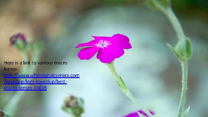 Photographing Flowers - John Munno_Page_22