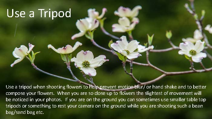 Photographing Flowers - John Munno_Page_24