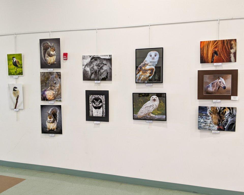 Animals Exhibit
