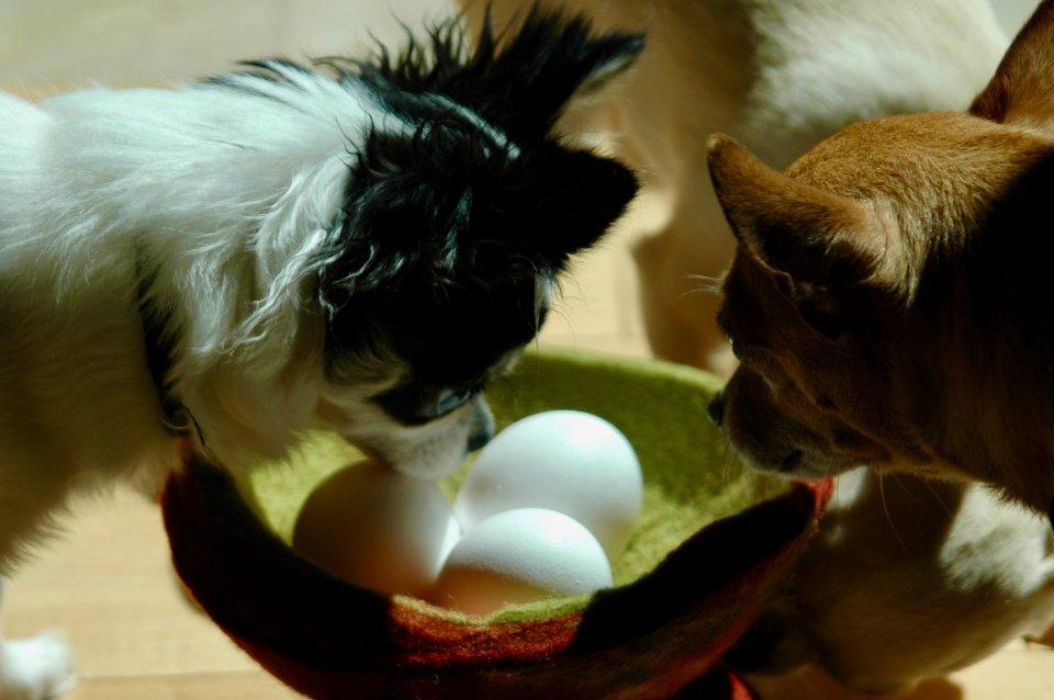 other20200404_scavengerhunt-eggs_q89x790_yvonne-chapman_puppyegghunt