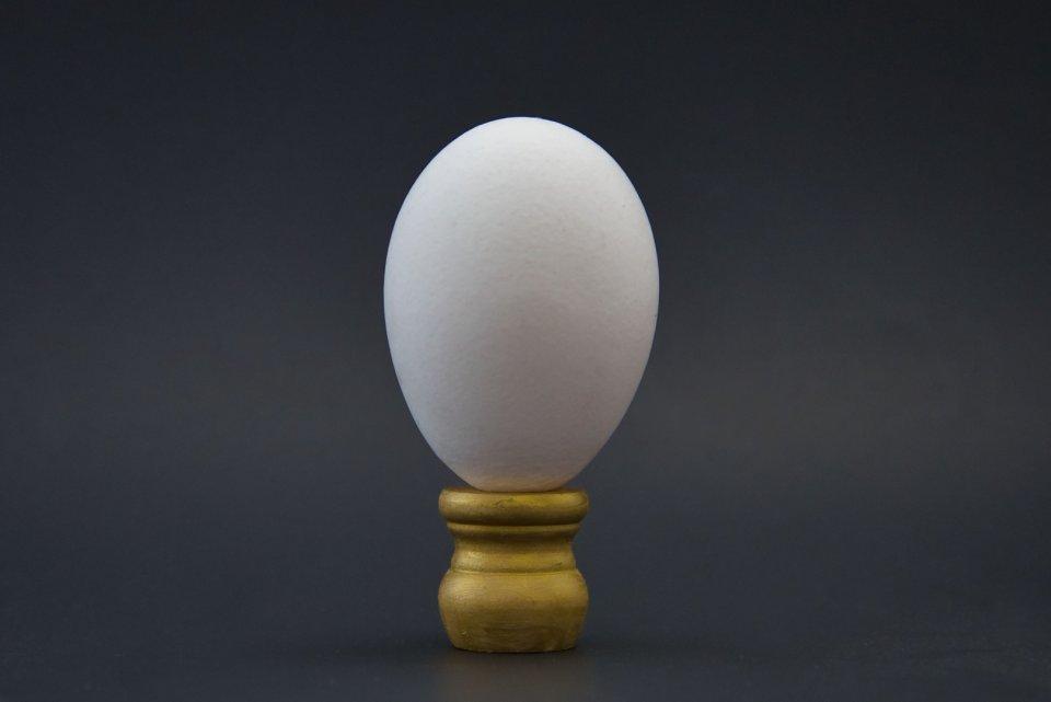 other20200404_scavengerhunt-eggs_q89zov0_jessica-leffelman_theincredibleedibl