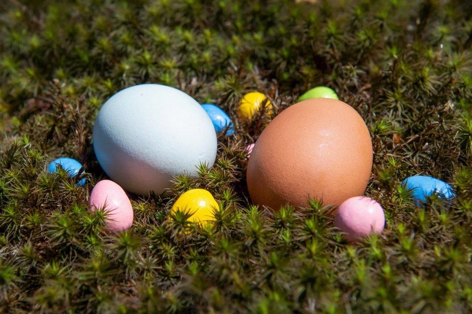 other20200404_scavengerhunt-eggs_q8a37n0_michelle-babyak_eastereggs