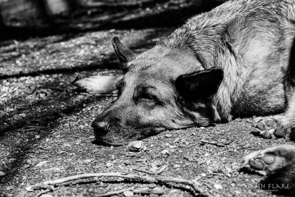 other20200404_scavengerhunt-monochrome_q8a0uy0_marion-lynott_sleepypup
