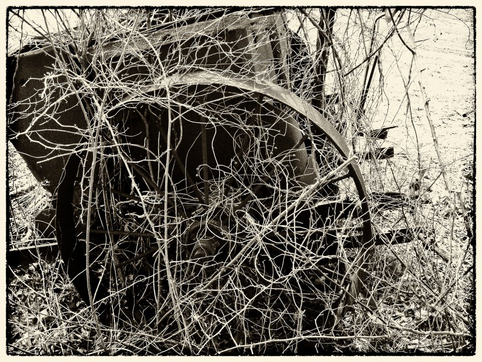 other20200404_scavengerhunt-monochrome_q8a1up0_doug-bilinski_overgrown