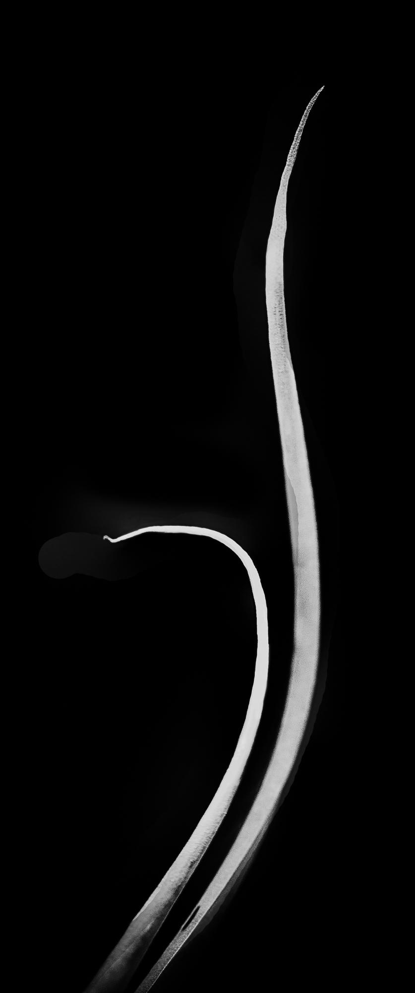 orchid-abstract-47-edit-edit-0f296c3a4fc7c8eff46430b5618ca9aad3527822