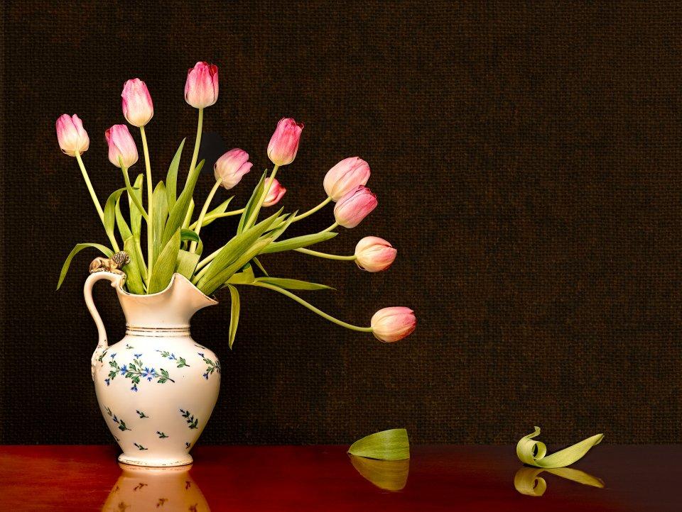 tulips5-w-texture-web-e34f4fdf29a44357cebc51516702d43f396e4cd4