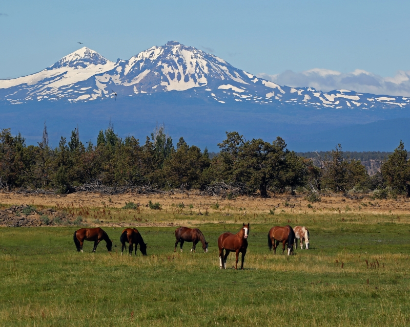 Central Oregon barn and horses