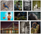 Flagpole Photographers Camera Club Places 1st in New England Color Print Competition