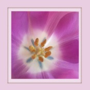 2016-10_DigitalB1_Micheline-Williams_The-heart-of-a-beautiful-tulip-