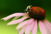 2016-10_Print_Michelle-Babyak_the-Pollinator