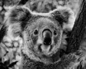 2016-11_Print_Chane-Cullens_Im-a-teddy-bear